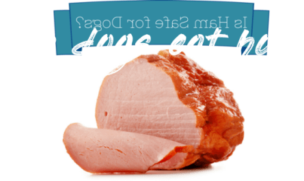 Things you should know about can dogs eat hot ham