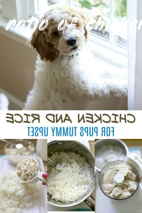 All you need to know about ratio of chicken and rice for dogs