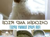 Why you must read about ratio of chicken and rice for dogs