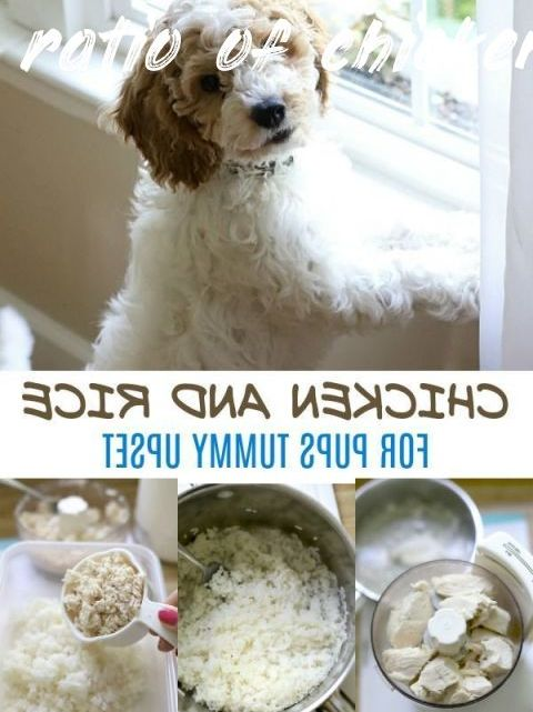 Ratio Of Chicken And Rice For Dogs