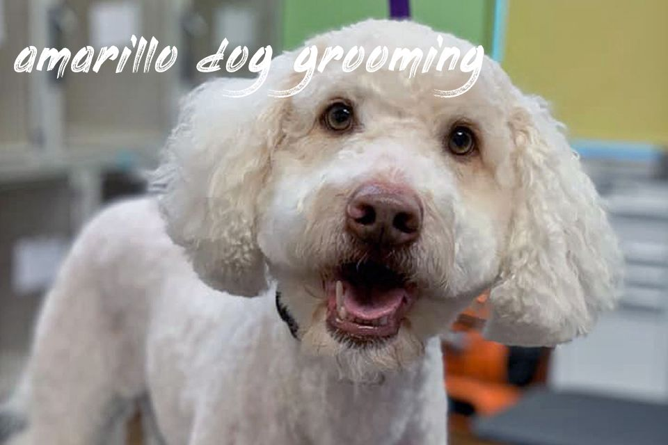 Amarillo Dog Grooming Recommended