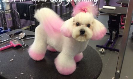 best in show dog grooming Cost