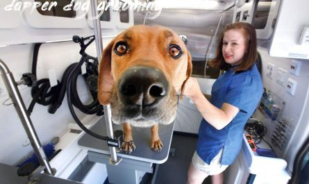 dapper dog grooming Where To Find