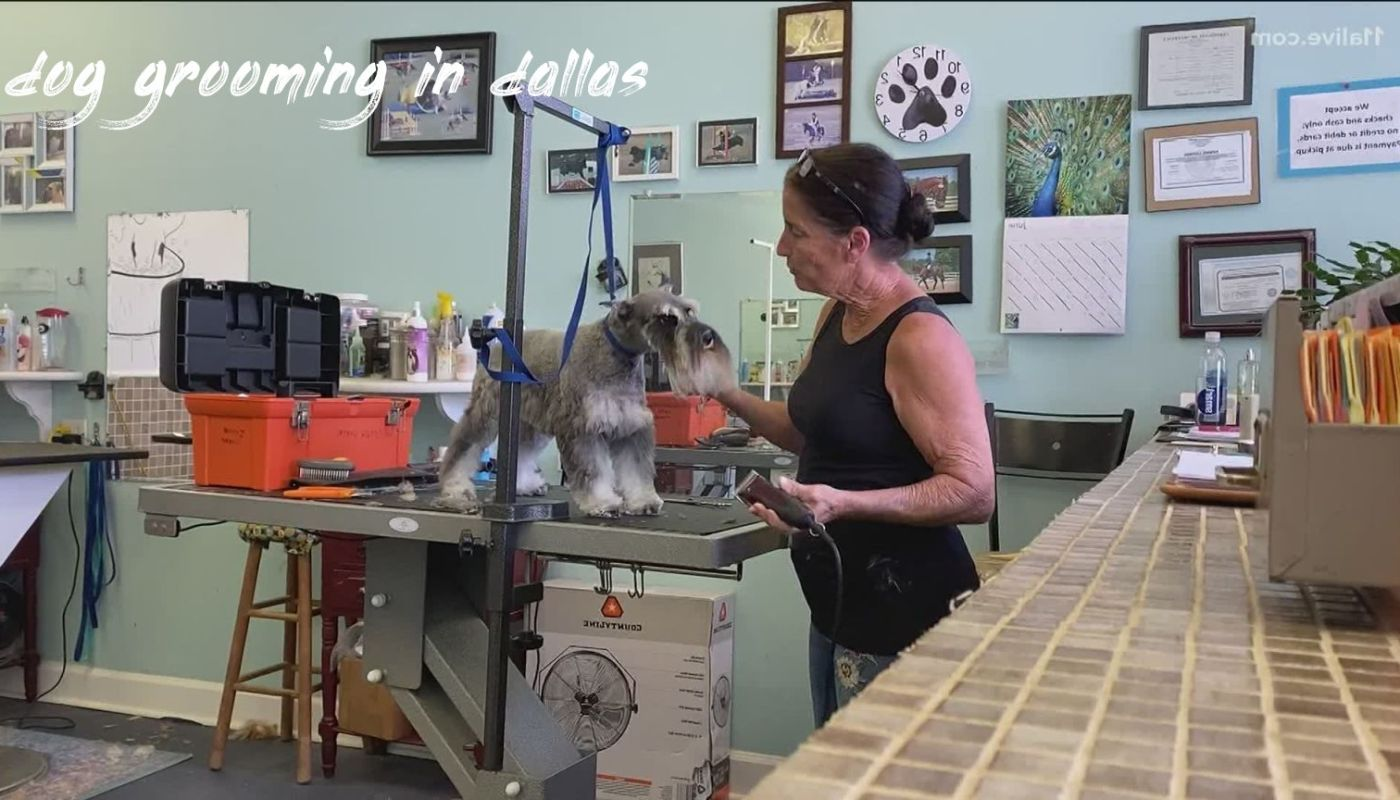 Dog Grooming In Dallas