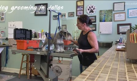 dog grooming in dallas Buyer Guide