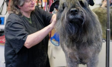 dog grooming in portland Overview