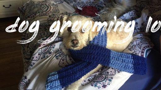 dog grooming local Buyer