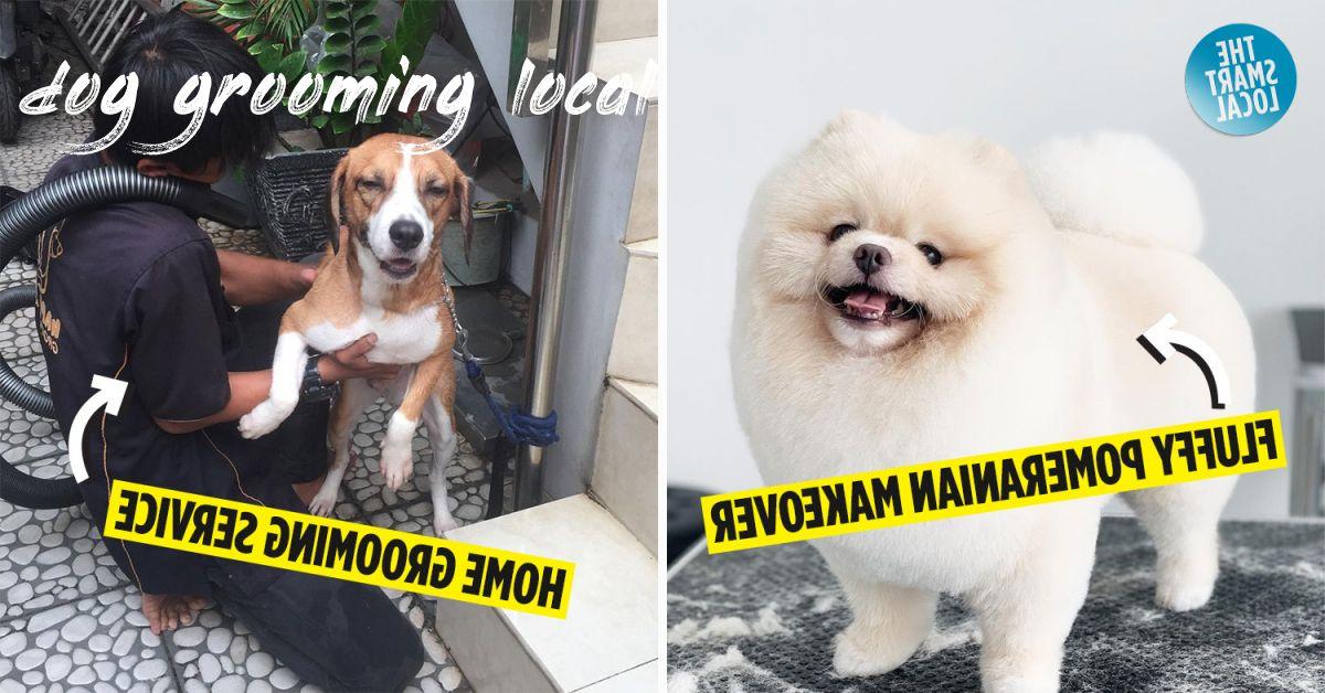dog grooming local