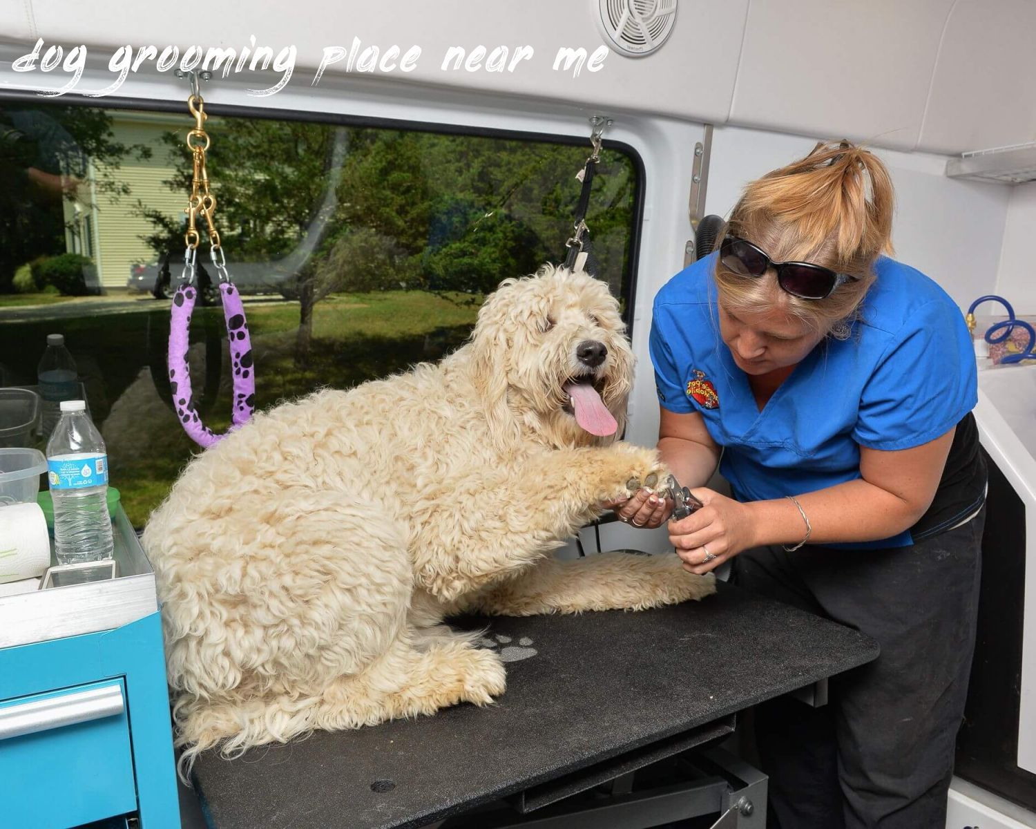 dog grooming place near me Buyer Guide