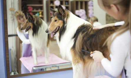 dog grooming salary Buyer