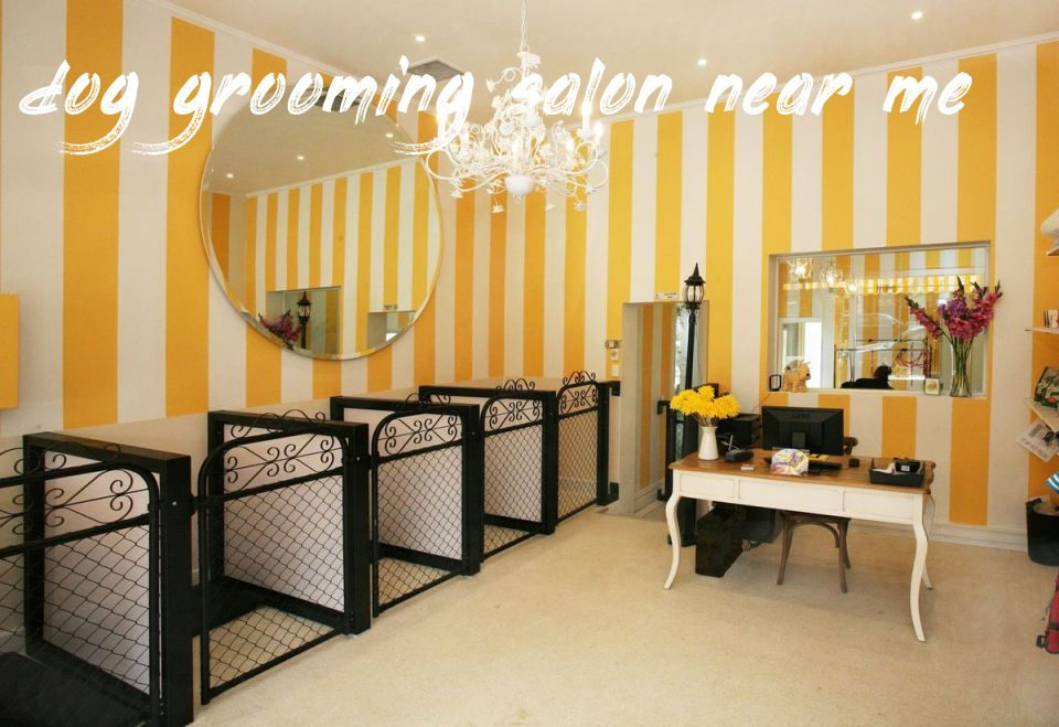 Dog Grooming Salon Near Me Price