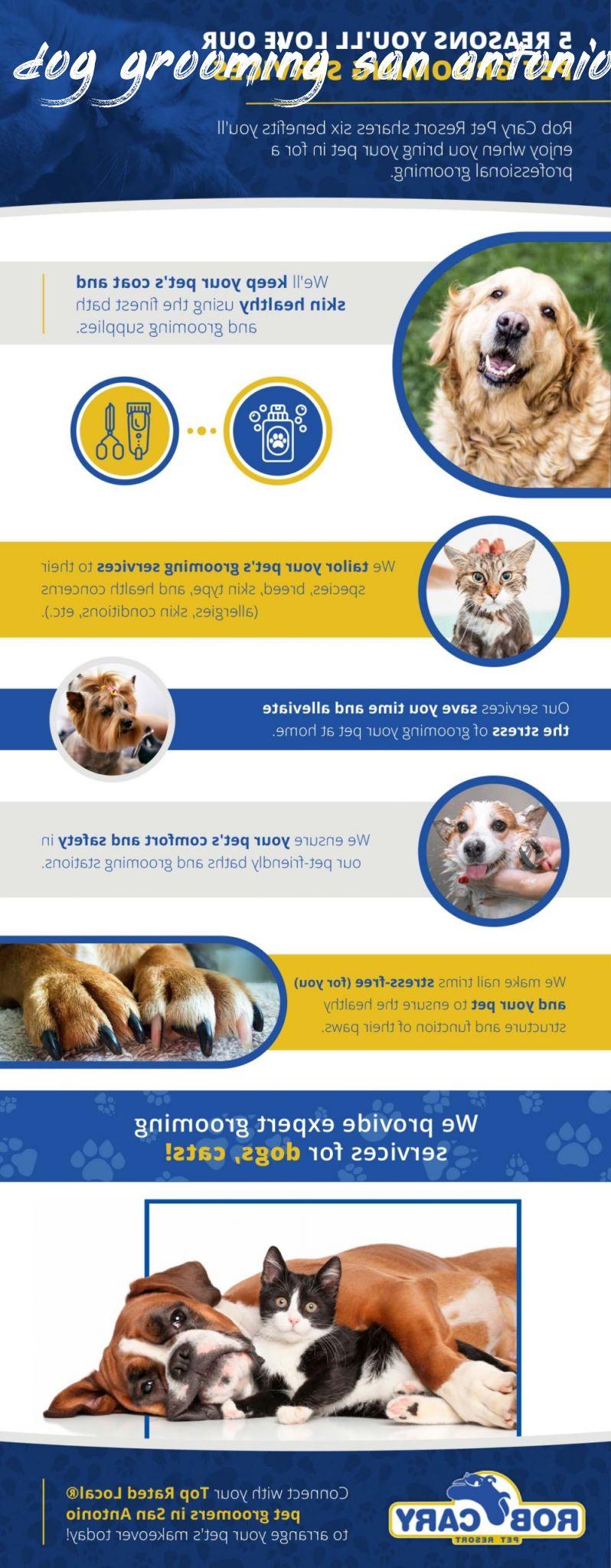 dog grooming san antonio Buyer Guide