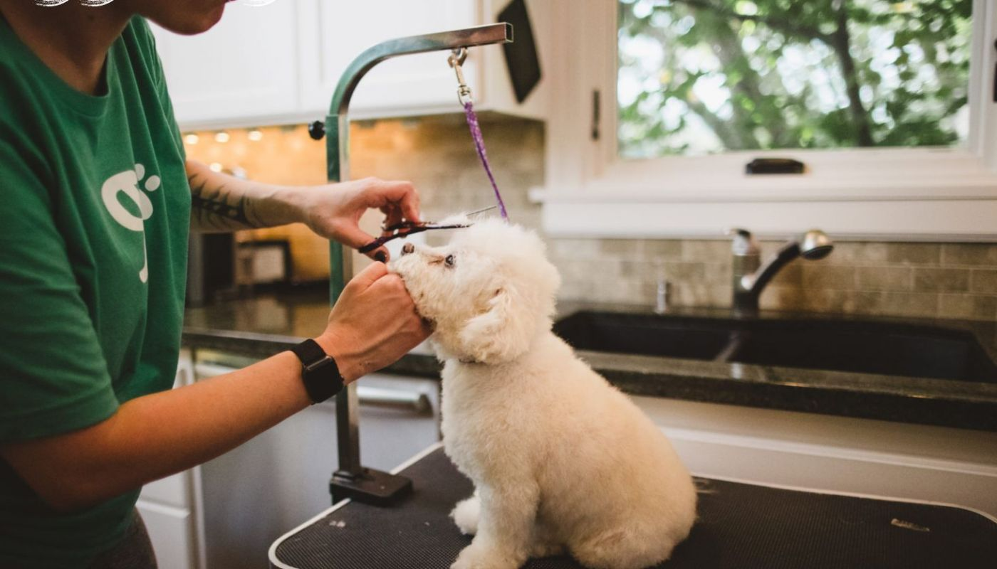 Dog Grooming Service At Home