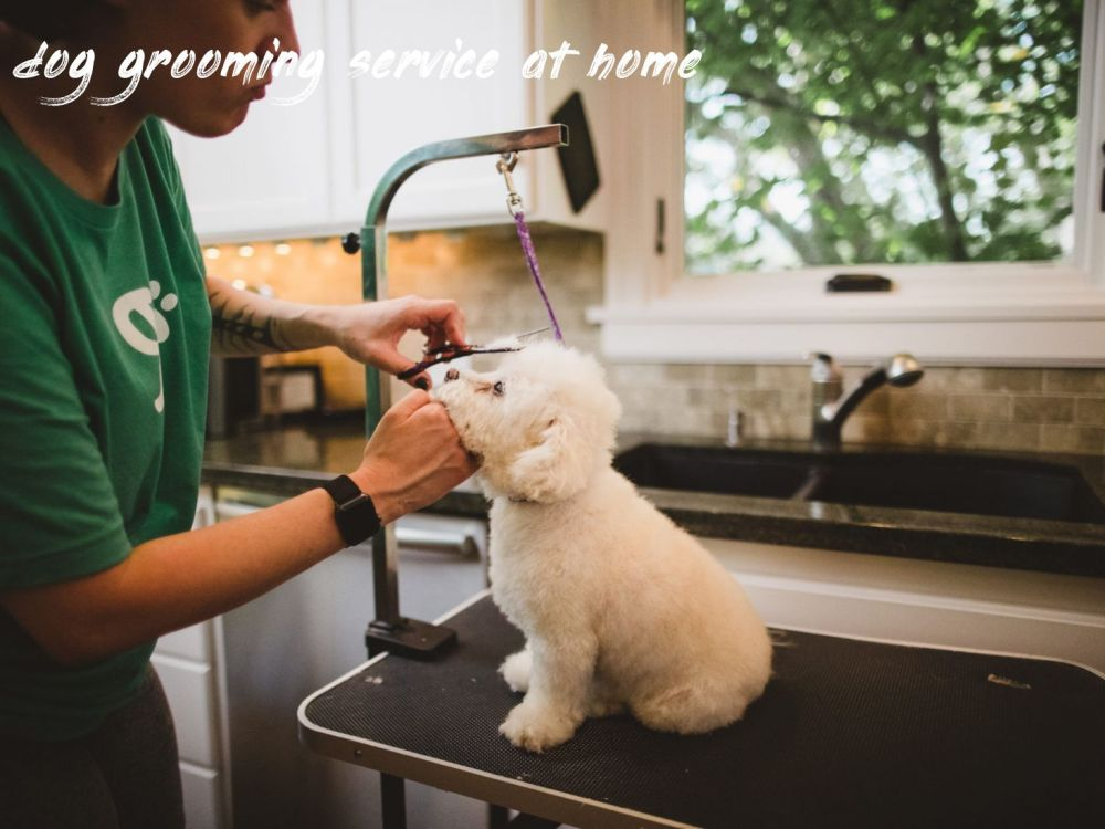 dog grooming service at home Overview