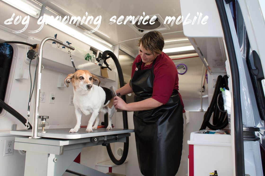 dog grooming service mobile Review