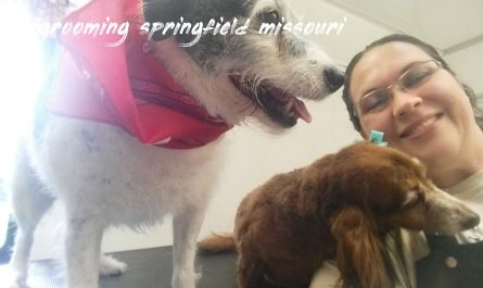 dog grooming springfield missouri Cost