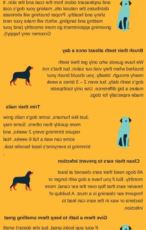 Dog Grooming Tips Price