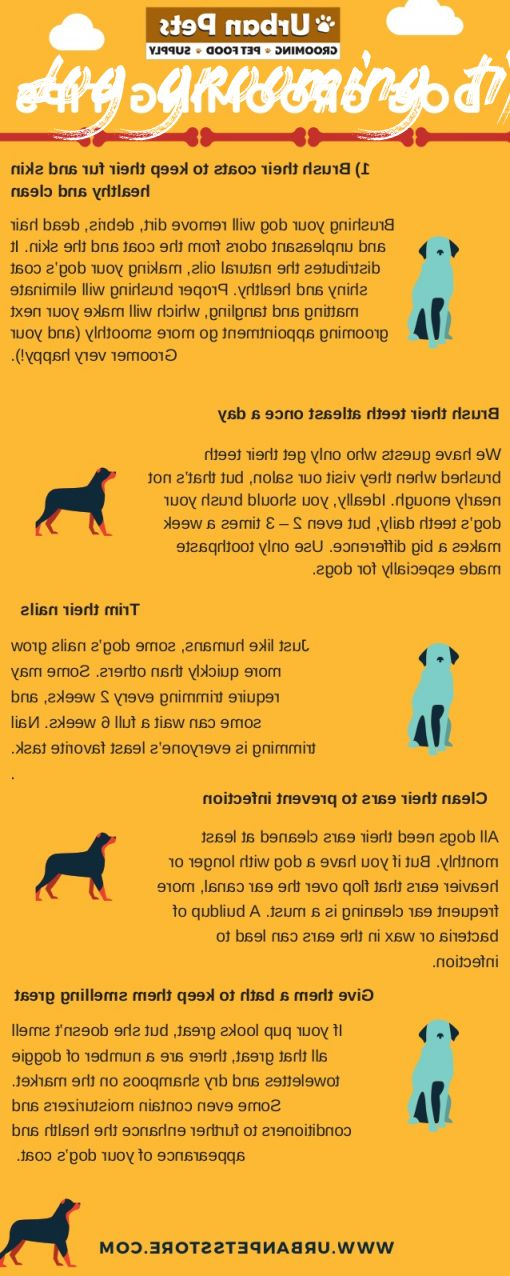 dog grooming tips How To Find