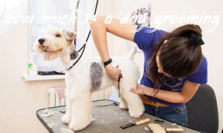 how much is a dog grooming Price
