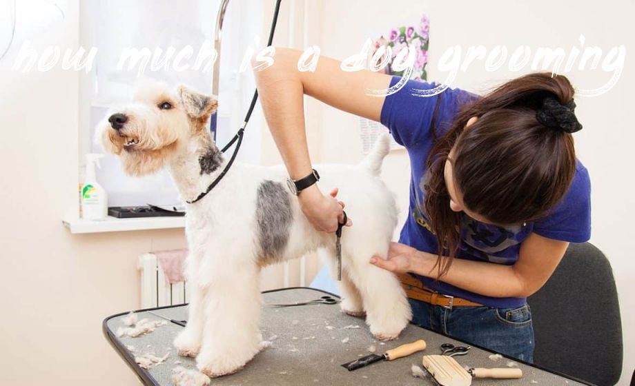 how much is a dog grooming Buyer
