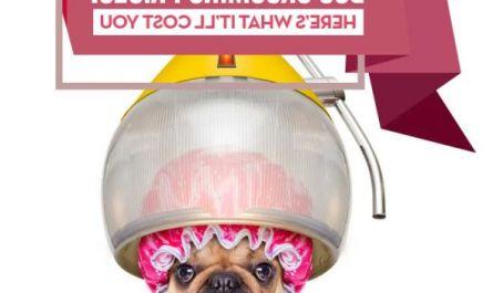 petsmart dog grooming price Cost