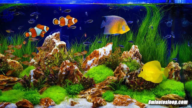 The Best Aquarium to Purchase For Your Fish