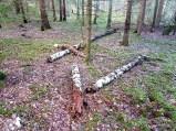 skogen17