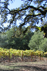 ghost-winery-img_vineyards