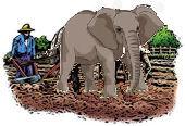 elephant-plow