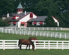 lexingtonhorsefarm