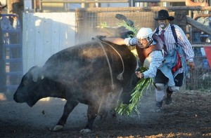 Barbara Ankrum bull rider hung up