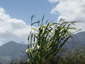 November 12 Wainae Mountains