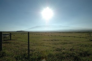 Petticoats Parker Ranch