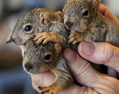 jolene squirrels