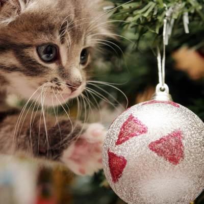 Come Fare Un Albero Di Natale A Prova Di Gatto Petvalley