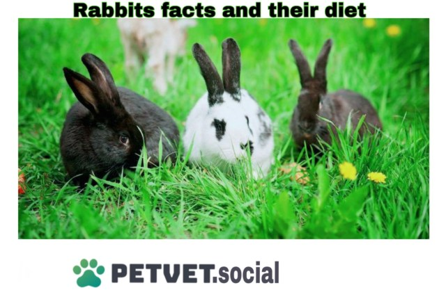 rabbits facts and habits