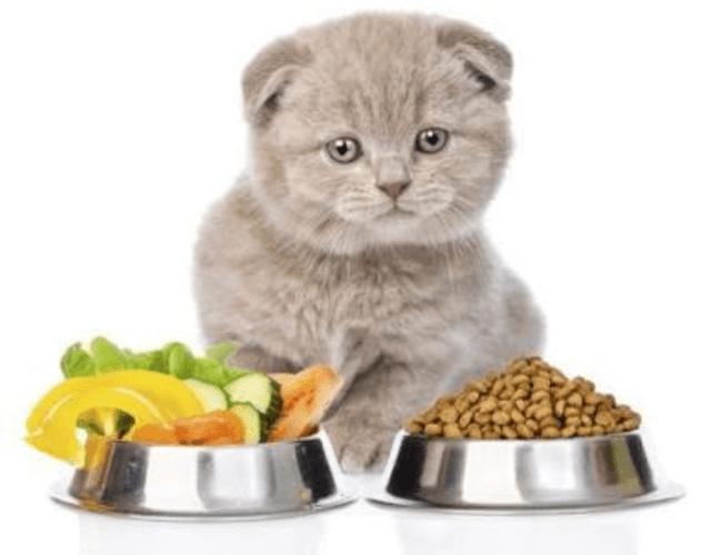 Analaysis on cat food