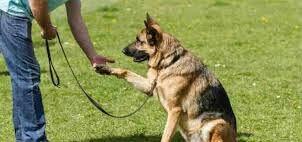 perfect-dog