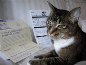 cat with paperwork