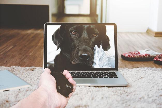 laptop-dog