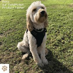 PetzMotion No Pull Dog Safety Harness