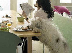Dnevna rutina iz pseće perspektive