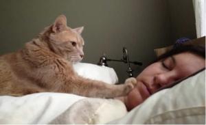 Budi se, dosta si spavala