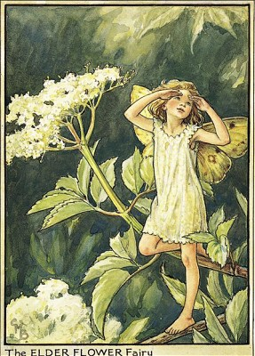Cicely-Mary-Barker06
