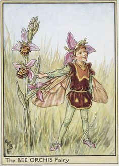 Cicely-Mary-Barker07