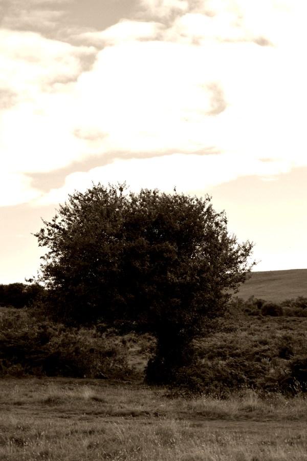 aubepinedartmoor