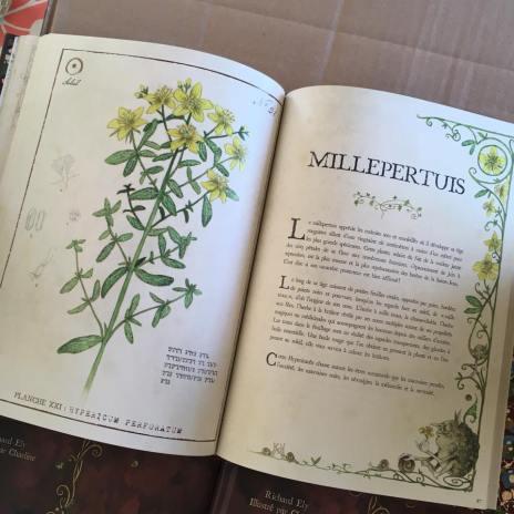 grimoire des plantes de sorciere plantes magiques pour jardin de sorciere