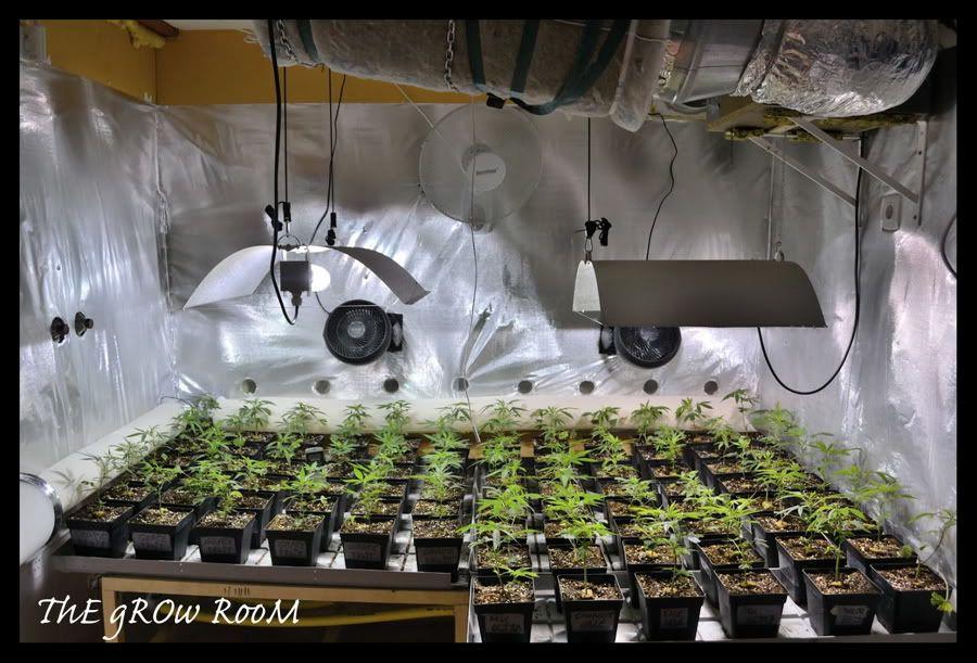 Construire Placard Cannabis With Construire Placard Cannabis