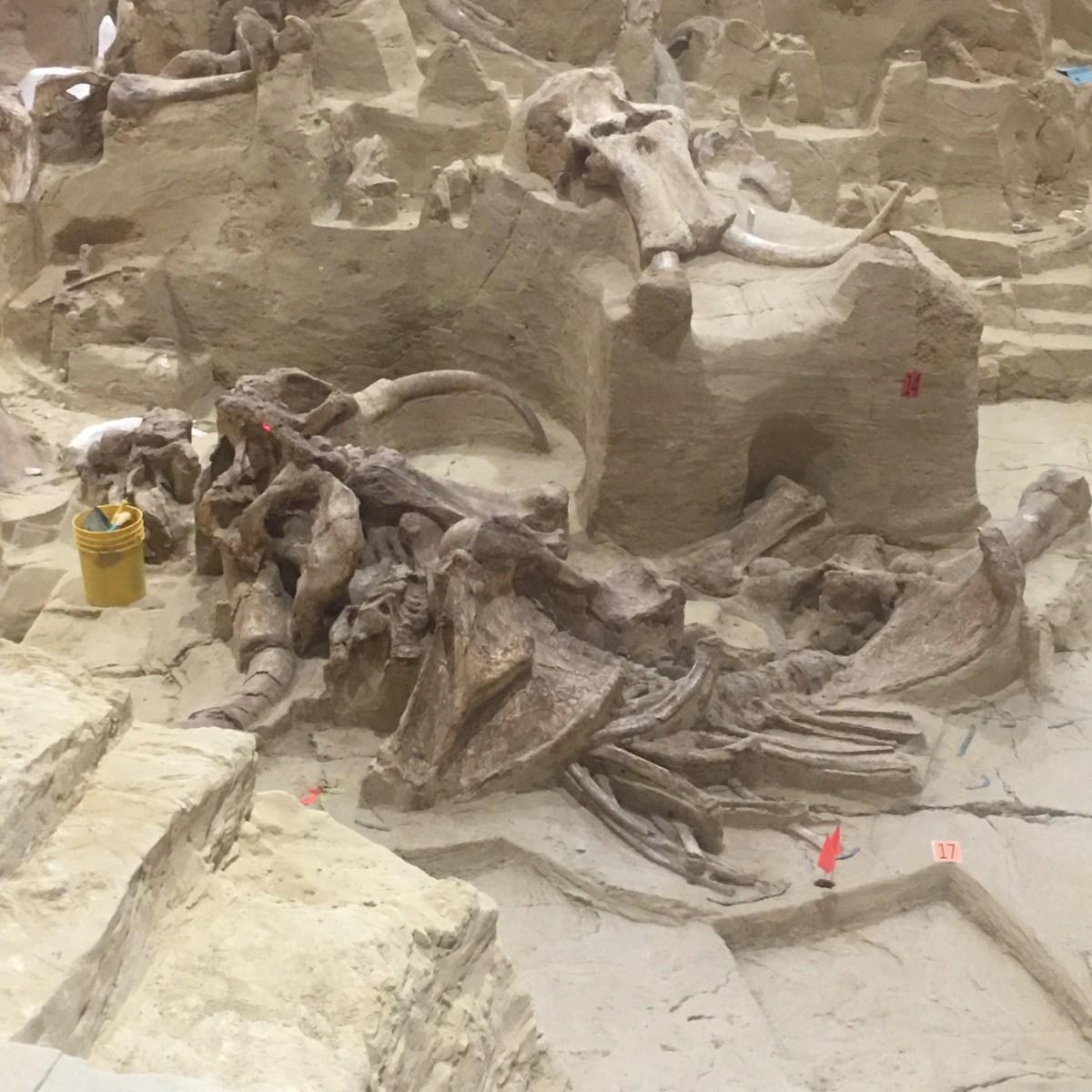 Mammoth Site Excavation