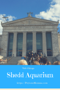 An Afternoon at the Shedd Aquarium